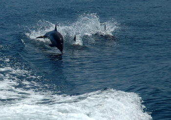 Dolphins_wakeriding_0088